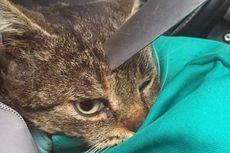 Tertancap Pisau di Kepalanya, Kucing Ini Lolos dari Maut