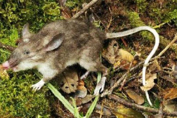 8300 Koleksi Gambar Hewan Seperti Tikus Gratis Terbaru