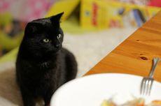 7 Penyebab Kucing Tidak Mau Makan dan Penjelasannya