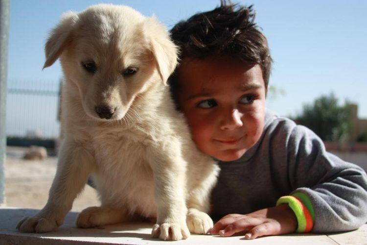 Seekor anjing dan bocah Palestina di penampungan Liga Hewan Palestina PAL, Jumat (17/7/2020).