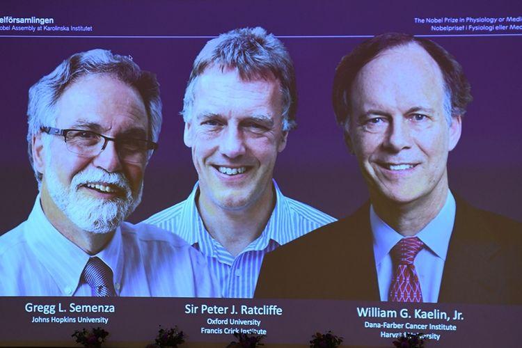 Profil pemenang Penghargaan Nobel Kedokteran 2019 baru saja diumumkan, Senin (7/10/2019).