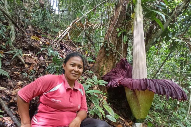 Yossi menemukan bunga bangkai mekar di perkebunannya di Agam, Sumatera Barat, Minggu (25/10/2020)