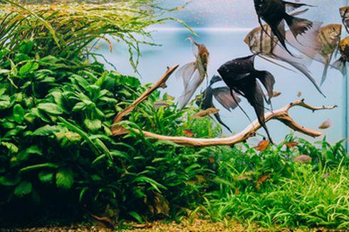 Tutorial Membuat Akuarium Ikan Sederhana Bersama Anak ala Dosen IPB
