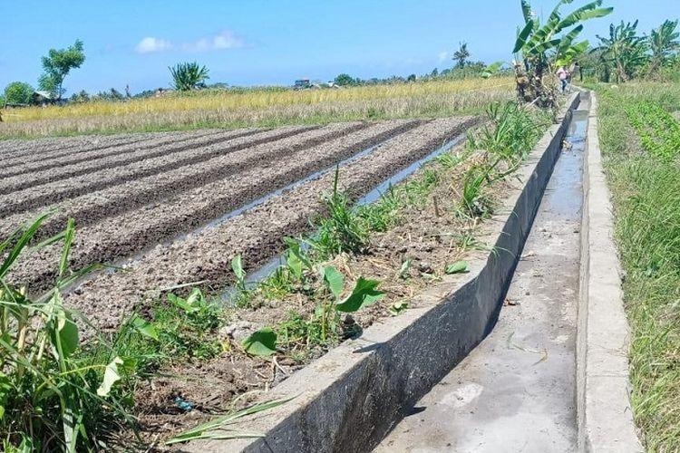Jaringan Irigasi Tersier di Desa Angantaka, Kecamatan Abiansemal, Kabupaten Badung, Provinsi Bali.