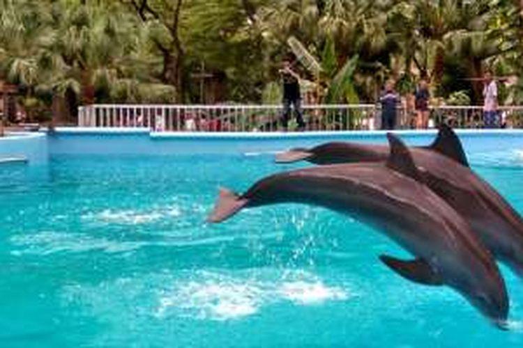 Dolphin Bay, wahana baru di Ocean Dream Samudra, Senin (19/12/2016), di mana pengunjung dapat berinteraksi dengan lumba-lumba.