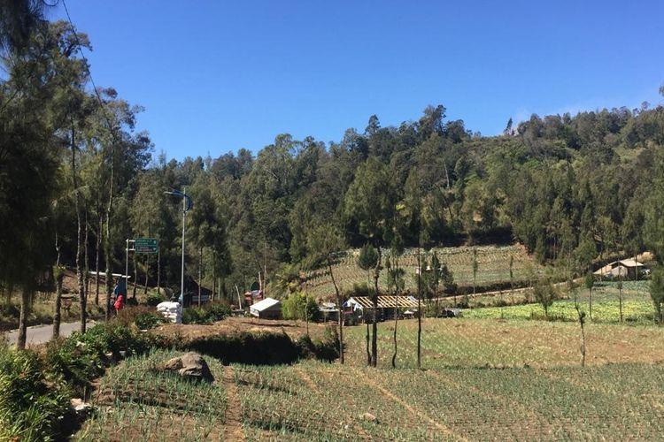 Suasana lokasi pendakian tim Jejak Pendaki Semeru
