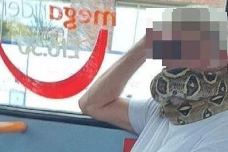 Seorang pria terlihat melilitkan ular asli di mulutnya sebagai masker saat menaiki bus di Salford, Inggris.