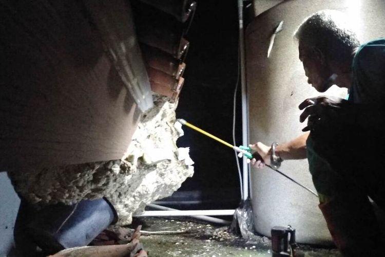 Petugas Animal Rescue Damkar Cianjur, Jawa Barat tengah berupaya mengevakuasi sarang tawon Vespa affinis yang menempel di plafon lantai dua rumah warga di daerah Maleber, Karangtengah, Cianjur, Jumat (14/2/2020) malam.