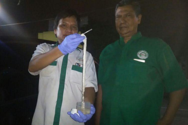 Cacing pita ditunjukkan tim Fakultas Kedokteran UISU Medan didampingi dr Umar Zein, Senin (26/3/2018).