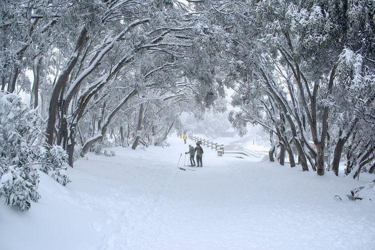 Ilustrasi Australia - Mount Buller di Victoria.