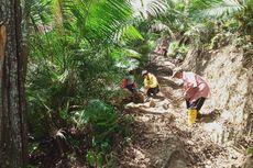 Babi Hutan Merusak 30 Hektar Lahan Warga di Ciamis