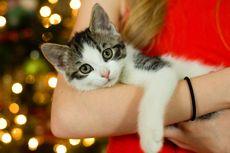 Kucing Mencakar Saat Dibelai? Ini Penyebabnya