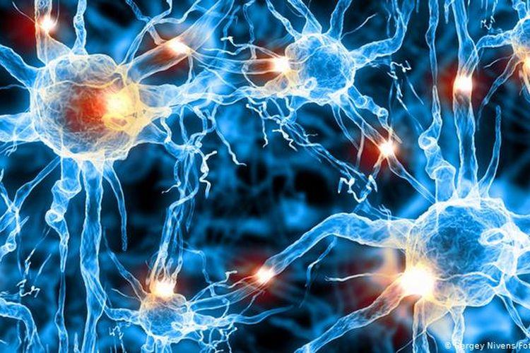 Ilustrasi, jaringan synapse saraf pada otak yang menerima sinyal rangsangan dari kulit