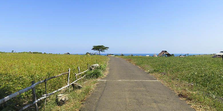 Perkebunan kedelai akan menyambut wisatawan menjelang sampai Pantai Buyutan.