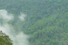 Kerusakan Hutan Belum Berhenti selama Pandemi