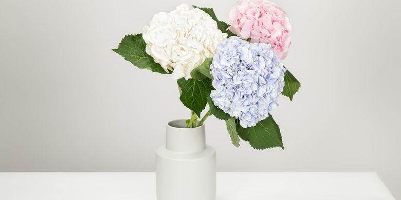 Rahasia Mengubah Warna Bunga Hortensia Sendiri Sesuai Keinginan