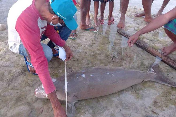 PHOTO:Warga di Kabupaten Sabi Raijua, NTT temukan seekor dugong di pinggir pantai