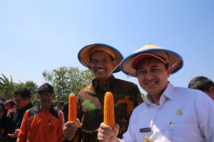 Panen raya jagung varietas Nakulaa Sadewa (Nasa) SinKembar Tongkol di Desa Joho, Kabupaten Nganjuk, Jumat (6/9/2019).