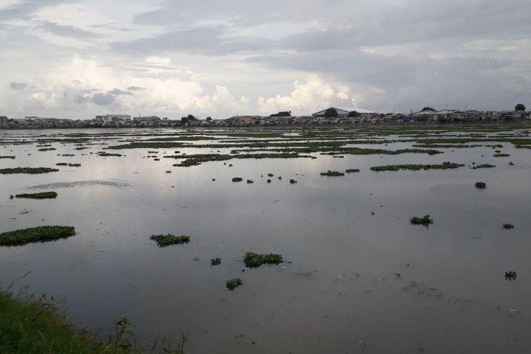 Waduk Pluit, Jakarta Utara, ditumbuhi tanaman eceng gondok, Kamis (21/2/2019).