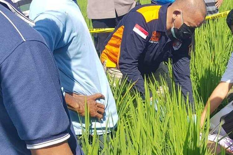 Perbaiki jebakan tikus beraliran listrik petani di Kabupaten Ngawi ditemukan tewas. Korban ditemukan oleh tetangganya yang merasa curiga ketika melihat sepeda motor korban di sawah sementara korban tak terlihat.