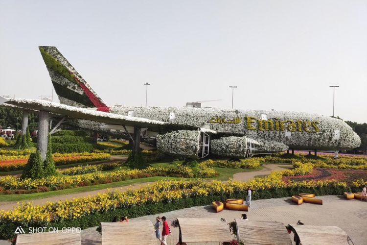 Pesawat Airbus A380 Emirates berada di Dubai Miracle Garden, taman bunga seluas 72.000 meter persegi yang ada di Kota Dubai, Uni Emirat Arab