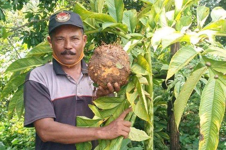Mujiono (56), seorang petani asal Desa Durenan, Kecamatan Gemarang, Kabupaten Madiun sukses membudidayakan porang.