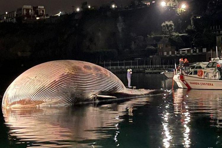 Operasi untuk menemukan dan mengangkat bangkai paus memakan waktu tiga hari