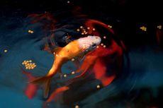 Wahana Akuarium Terbesar di Paris Tampung Ikan Peliharaan yang Dibuang