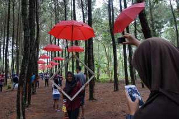 Wisata hutan pinus di Songgon, Kabupaten Banyuwangi, Jatim, cocok buat wisatawan yang suka selfie.