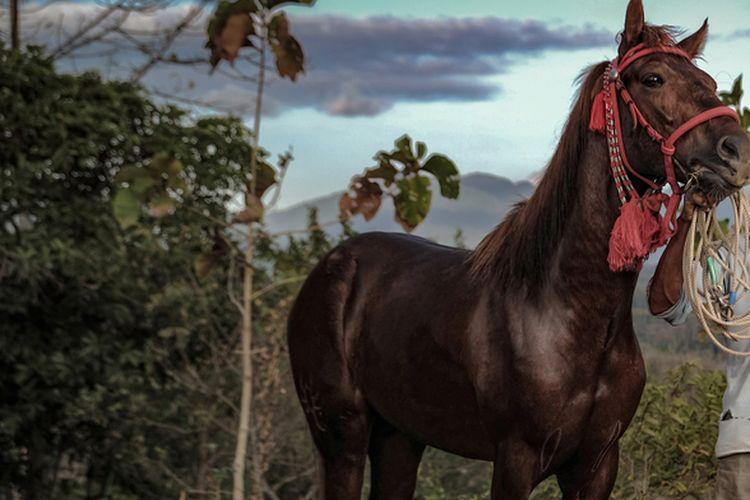 Ilustrasi kuda di Bima.