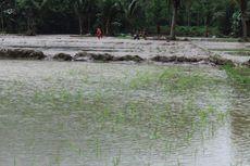 Pemerintah Siapkan Rp 200 Miliar untuk Petani yang Kebanjiran