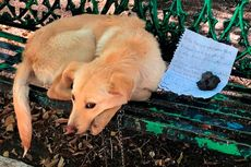 Anak Anjing Ditemukan Dirantai di Bangku Taman dengan Catatan Memilukan