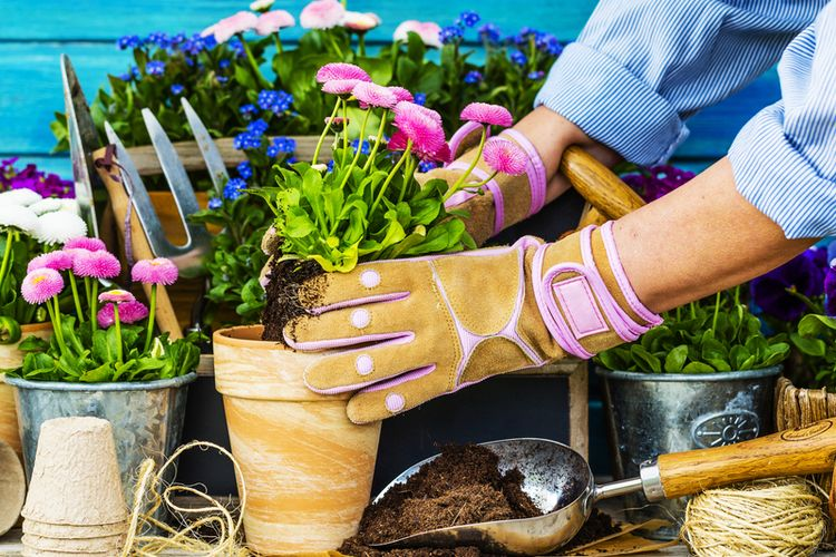 Illustration of caring for ornamental plants, potted plants.