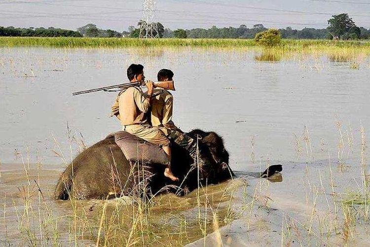 Polisi hutan India berpatroli sambil menunggang gajah di Suaka Margasatwa Pobitora di Morigaon, negara bagian Assam.