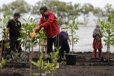 Jokowi: Rehabilitasi Hutan Mangrove Ditargetkan Bisa Capai 600.000 Hektar dalam 3 Tahun