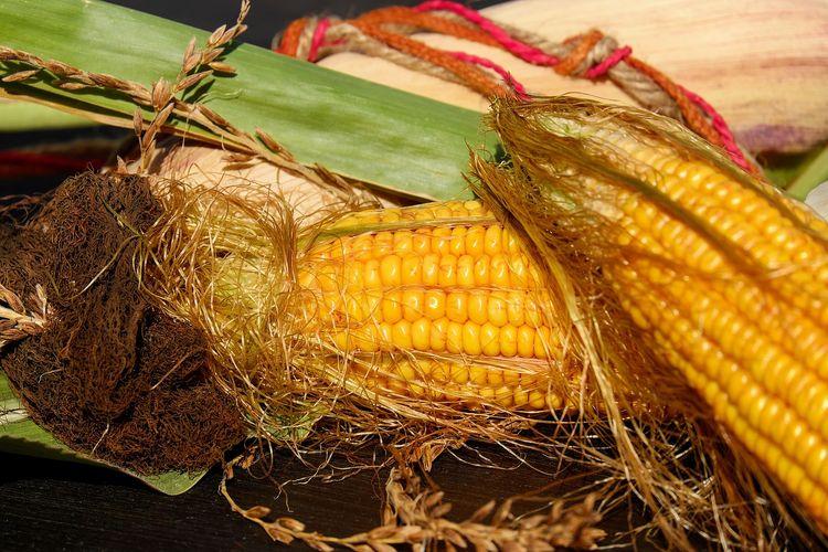 Ilustrasi jagung muda belum dibersihkan dari rambut-rambutnya.