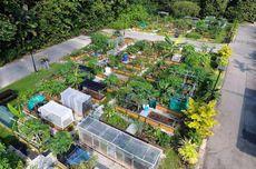 Cara Singapura Tambah Ruang Terbuka Hijau, Sewakan Kebun untuk Warga