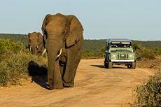 Afrika Selatan Isyaratkan Tutup bagi Wisatawan Asing hingga 2021