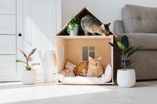 11 Tips Mudah Rawat Kucing Kesayangan dari Pakar IPB