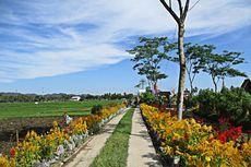 Selain Refugia, Ini Kelebihan Lain Bulak Widoro sebagai Taman Bunga