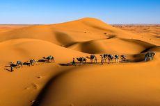 Penuh Lele dan Nila, Ini Bukti Gurun Sahara Tak Setandus Sekarang