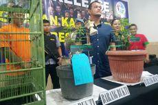 Tanam 7 Pohon Ganja, Pria di Bandung Ini Ditangkap