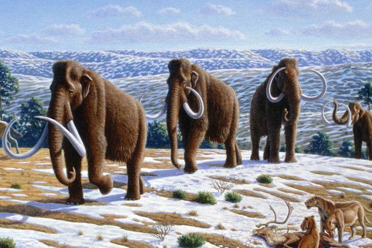 Ilustrasi Woolly mammoths (Mammuthus primigenius) atau mammoth berbulu dalam landskap akhir Pleistocene di Spanyol utara.