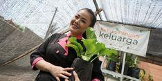 Pandemi Pengaruhi Ekonomi, Chef Aiko Anjurkan Berkebun Pangan dan Budikdamber