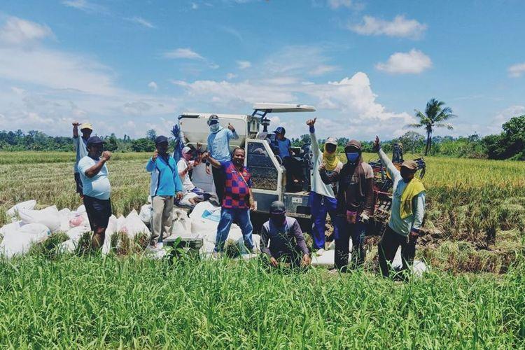 Meski pandemi, kelompok tani (poktan) Ngudi Rejeki dan Bahagia di Kabupaten Nabire, Papua tetap melaksanakan panen padinya.