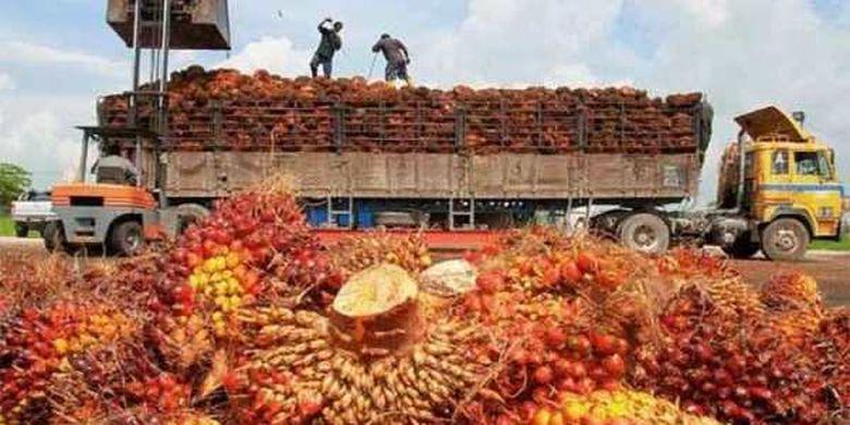 Kelapa sawit jadi produk andalan ekspor Indonesia