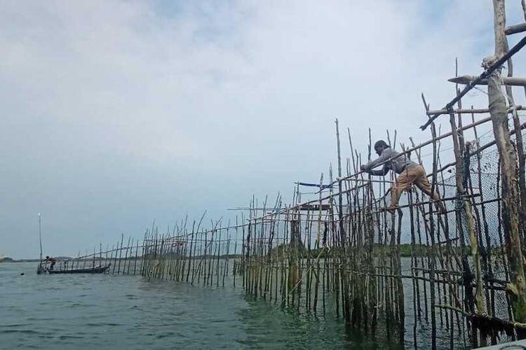 Salah satu keramba ikan Dingkis yang ada di Pulau Kasu, Belakangpadang, Batam, Kepulauan Riau.