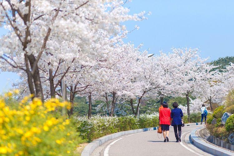 Tempat wisata di Korea Selatan - Tempat wisata bernama Naksan Park di pusat Kota Seoul yang cocok untuk melihat pemandangan kota metropolitan tersebut dari ketinggian.