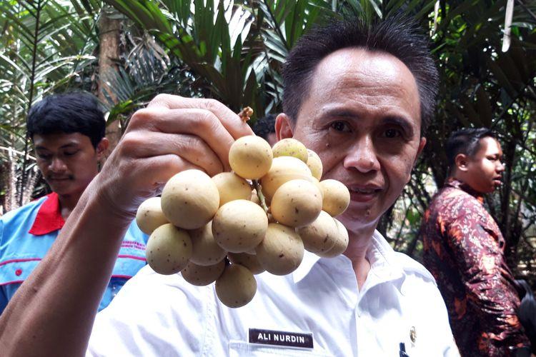 Hasil buah duku di Cagar Buah Condet, Jakarta Timur