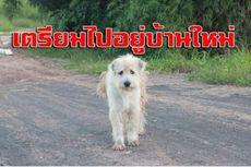 4 Tahun Menunggu di Tempat yang Sama, Anjing Setia Ini Berkumpul Kembali dengan Majikannya